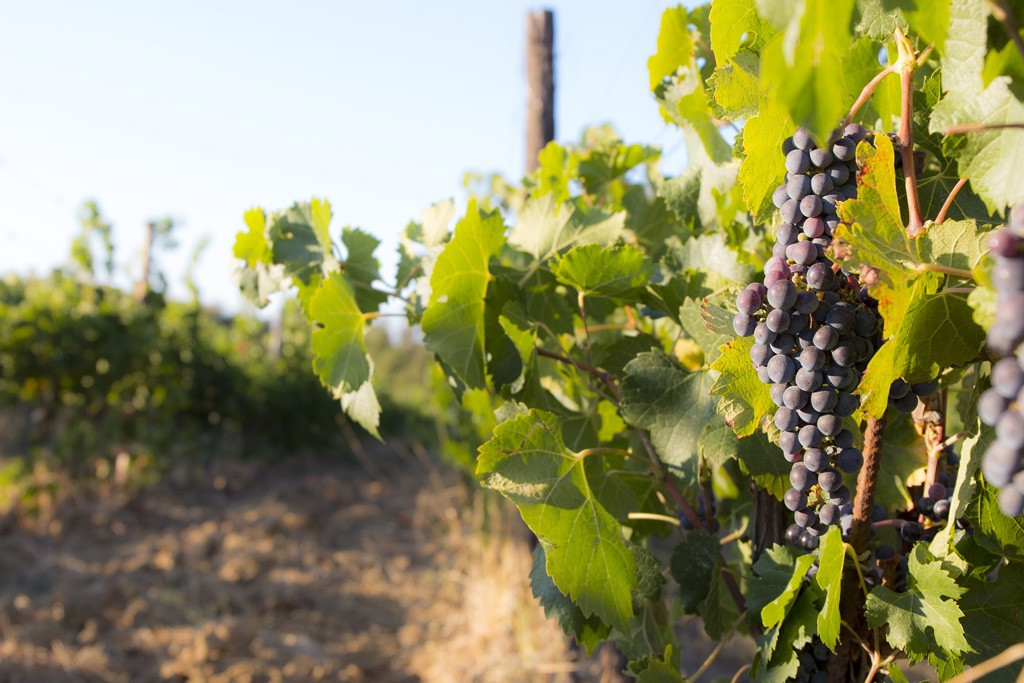 Where to Go in Italy for Wine Lovers: A Commentary on Chianti